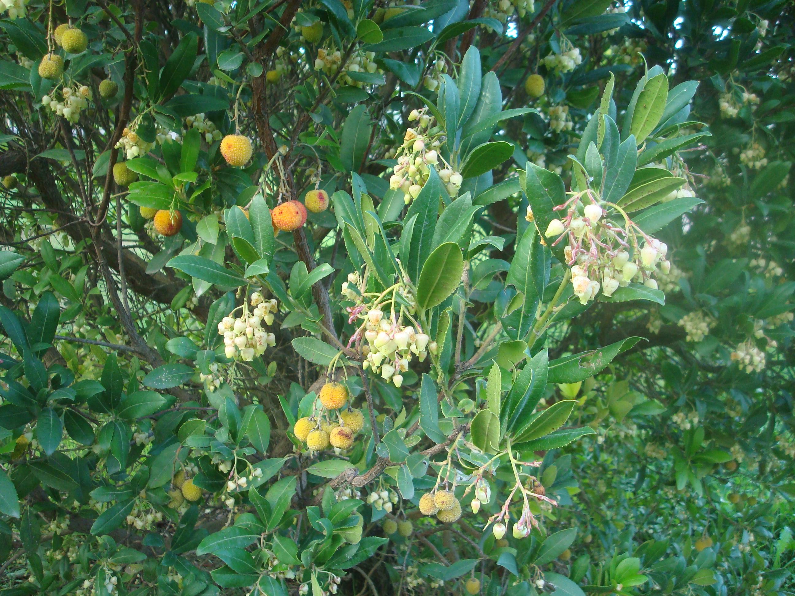 Floración y maduración de frutos (del año anterior)
