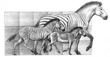 rumbos.la evolución del caballo
