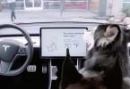 """El """"modo perro"""" de Tesla está disponible en el Model 3"""